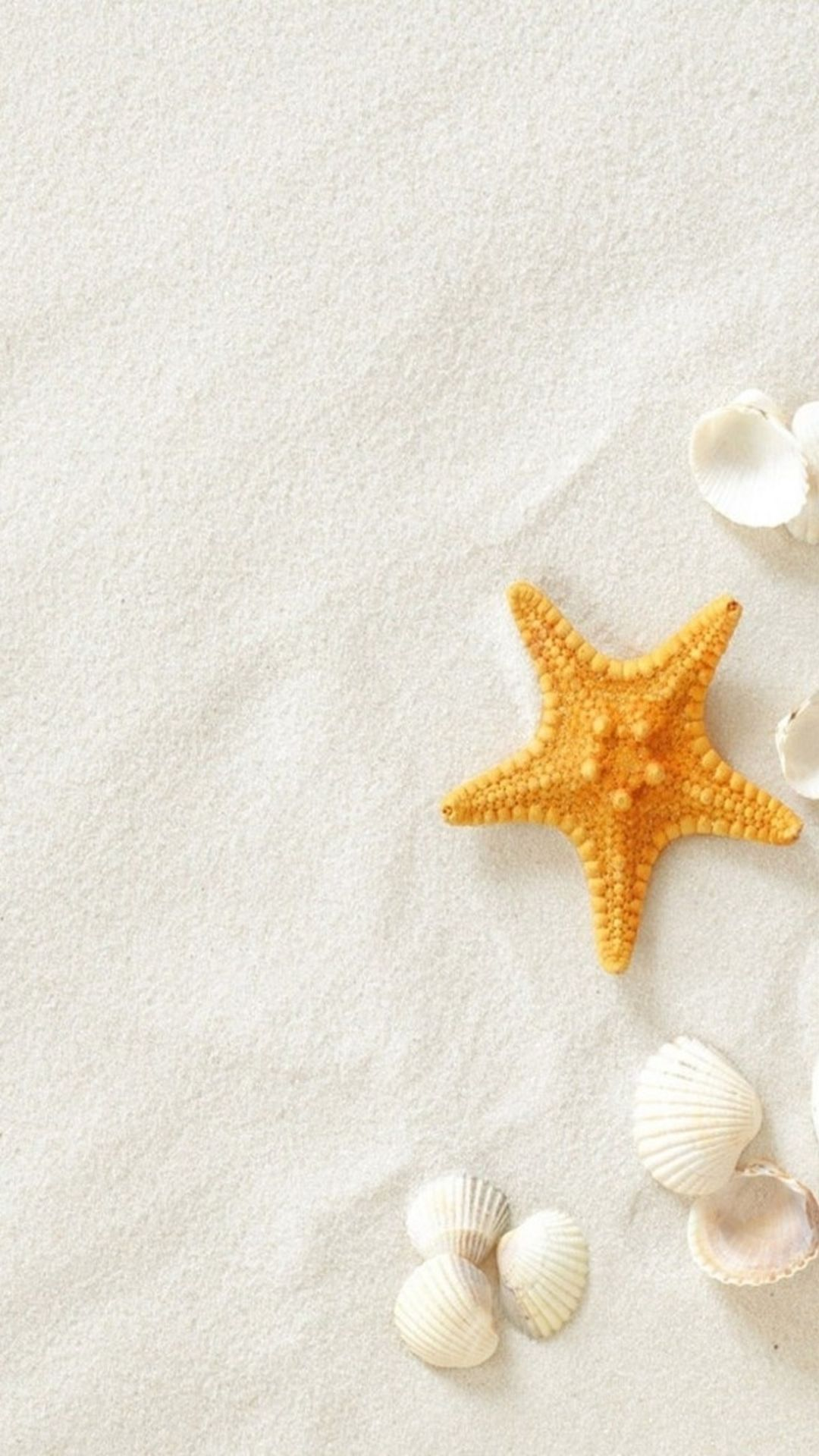 pure seaside beach starfish seashell #iphone #6 #plus #wallpaper