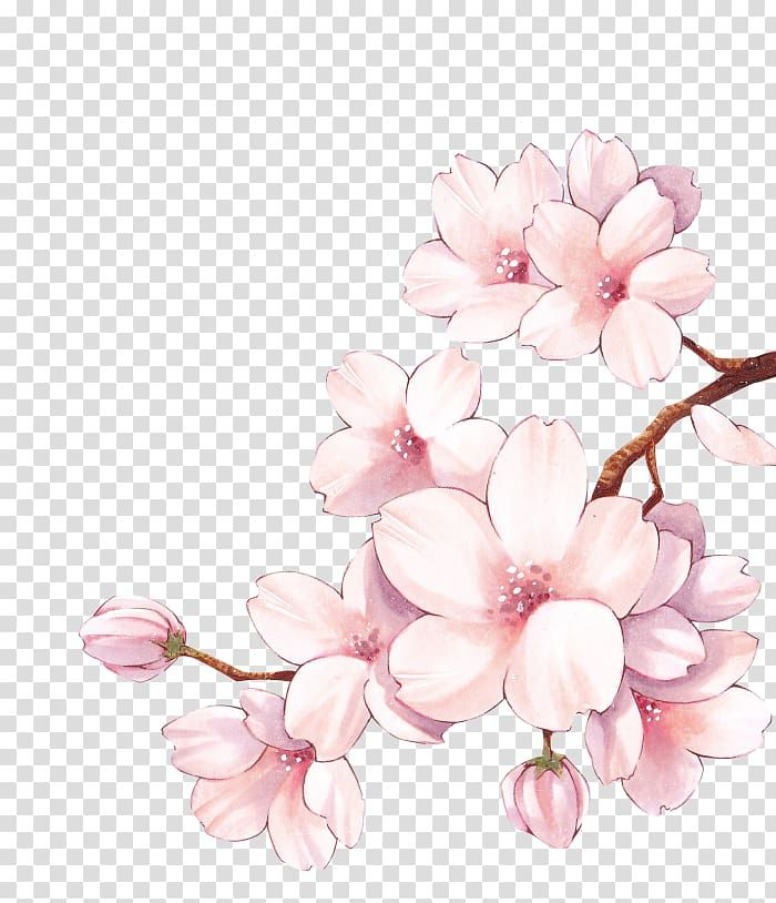 Paper Cherry Blossom Watercolor Painting Flower Cherry Blossom Transparent Background Cherry Blossom Painting Cherry Blossom Watercolor Cherry Blossom Drawing