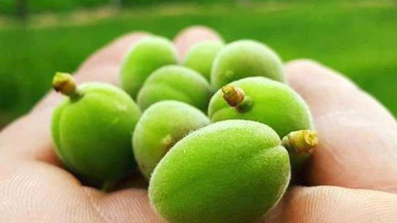 ما هي فوائد اللوز الأخضر أو ما يسمى العقابية New Shows Grapes Fruit