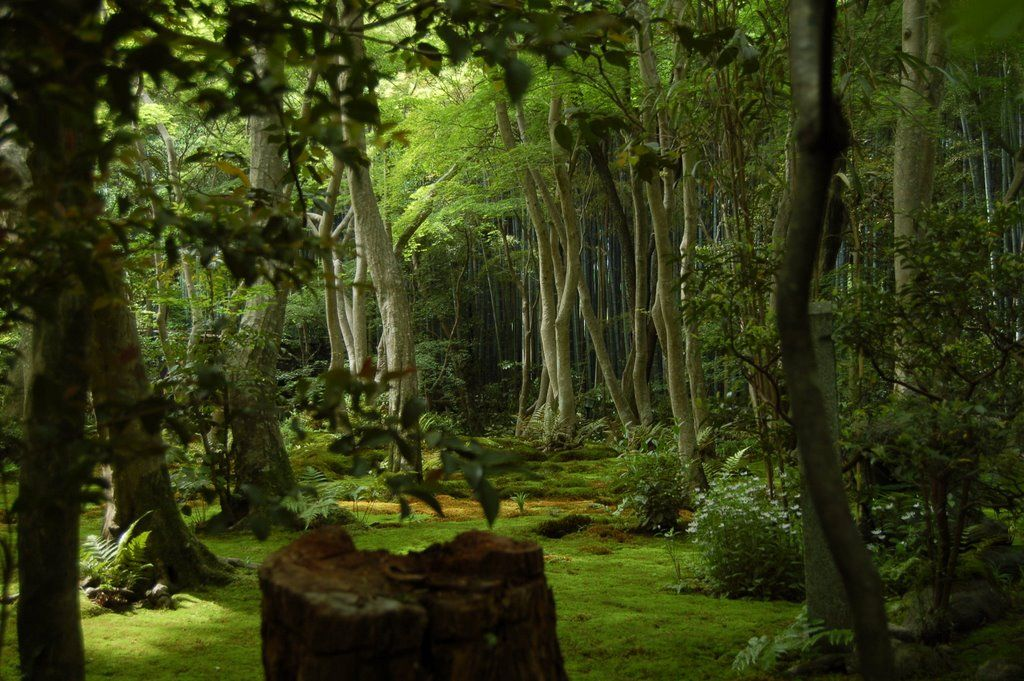 Old Forest Concept With Images Sacred Garden Forest Photo