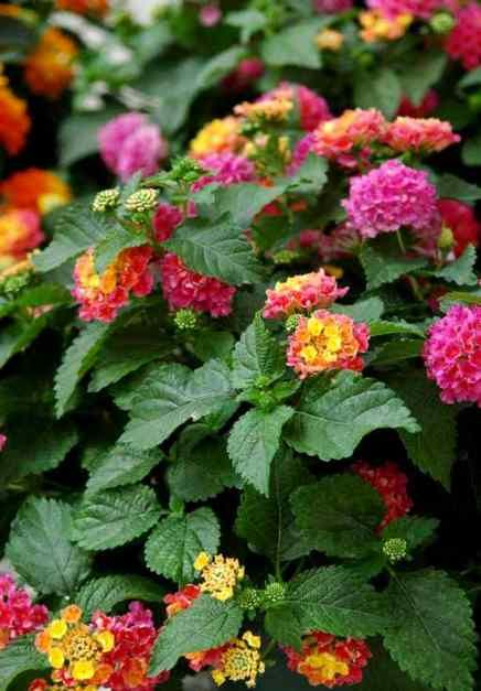 Ideas Para Mi Jardin. Stunning Ideas Para Mi Jardin With Ideas Para ...