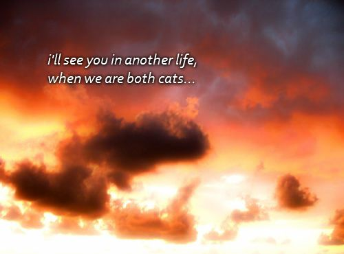 i'll see you in another life when we are both cats...