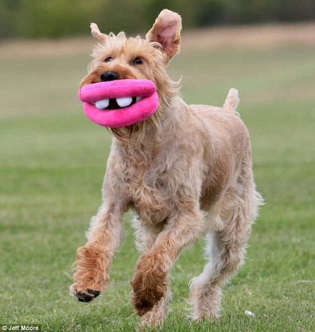 Botox For Dogs The Goofy Toy That Brings A Huge Smile To Your