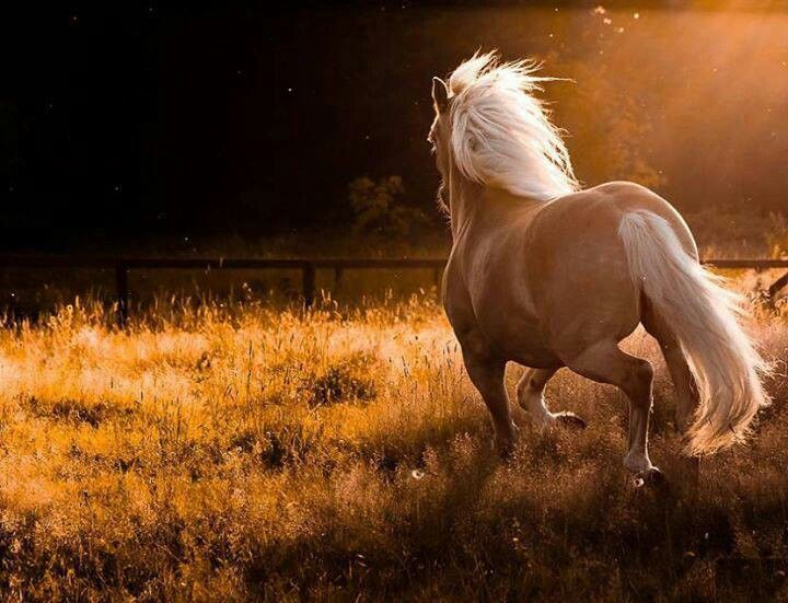 i'm going to have this horse someday