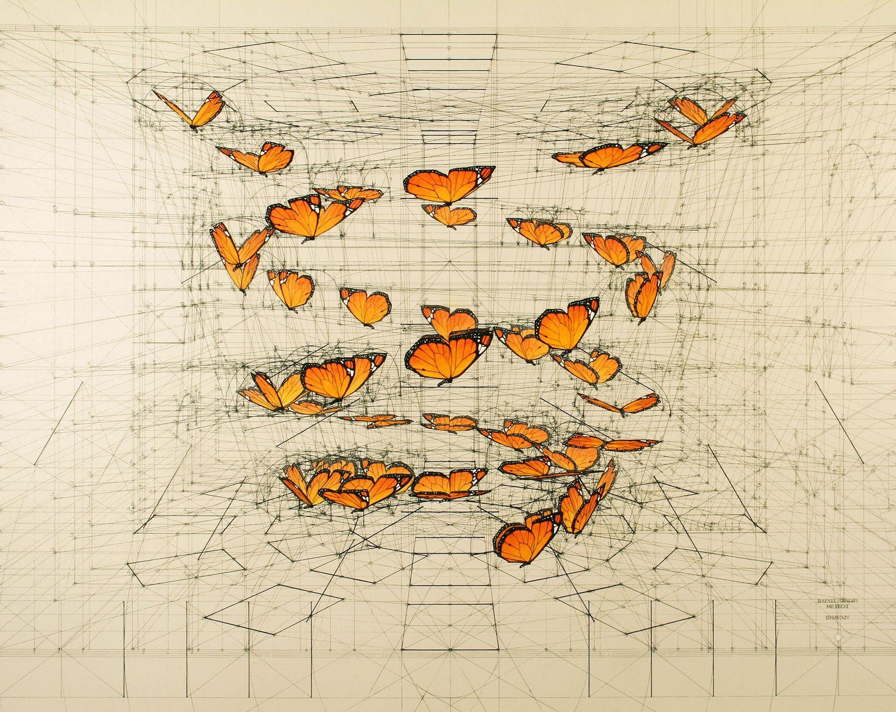 Calculation è Una Serie Dell Illustratore Rafael Araujo In Cui Farfalle E Conchiglie Trasformano S Nel 2020 Libri Da Colorare Per Adulti Libri Da Colorare Illustrazioni