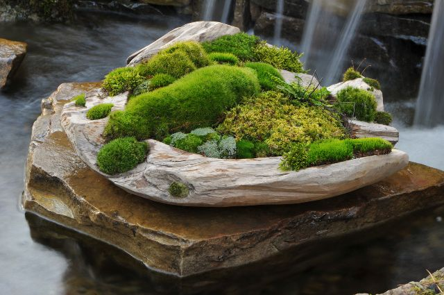 Jardin miniature fait de différentes mousses Zen, kokedama and
