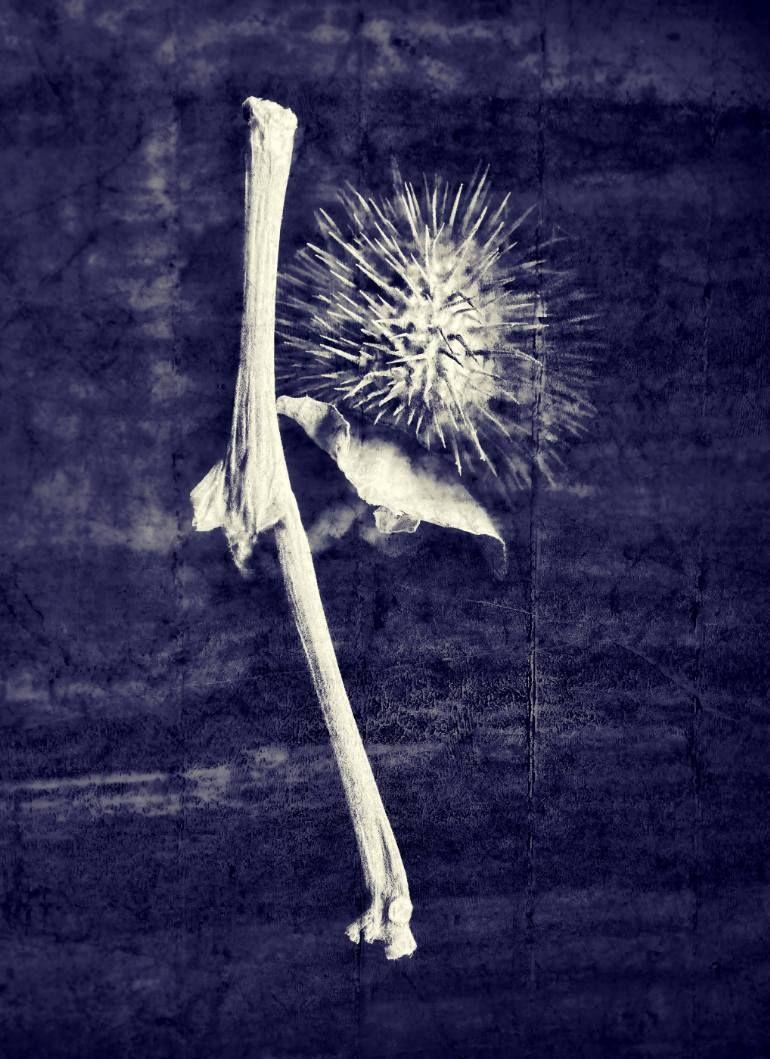 "Saatchi Art Artist Joanne Donnelly; Photography, ""Datura"" #art"
