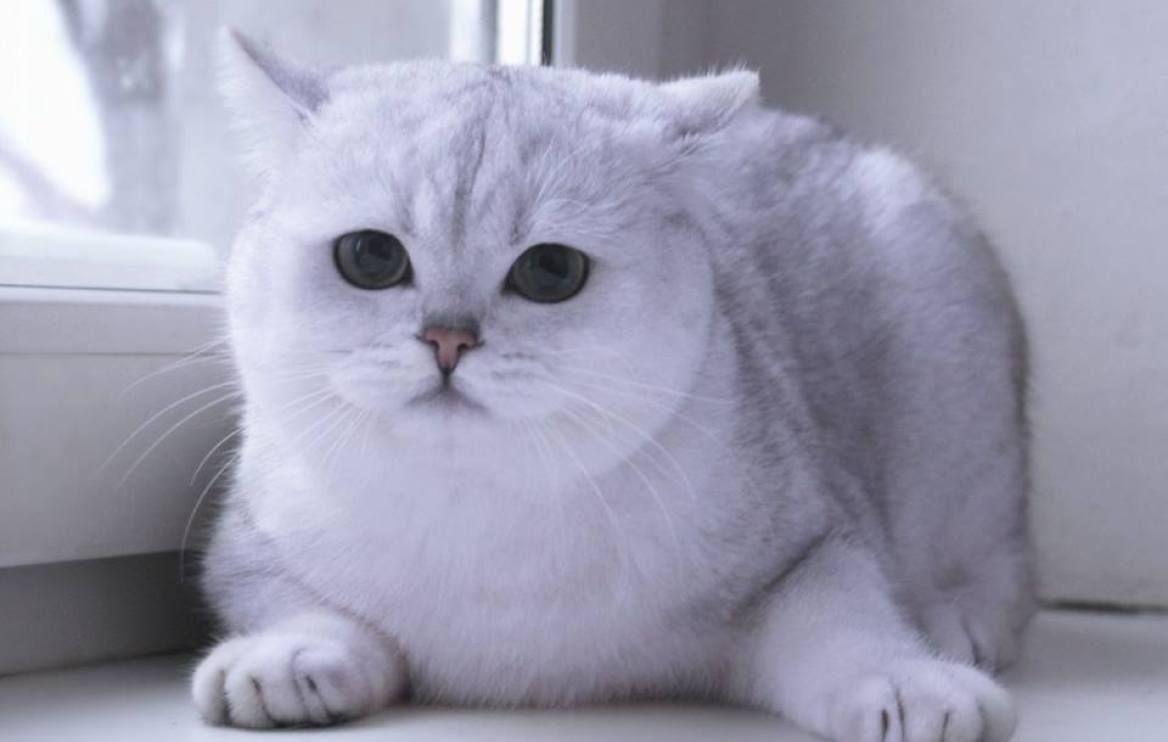 أفضل أنواع القطط لتربيتها في المنزل عالم القطط Cats Animals Photo
