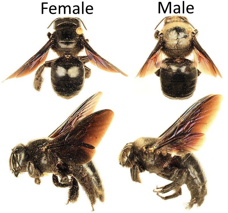 How to get rid of carpenter bees inside and outside of