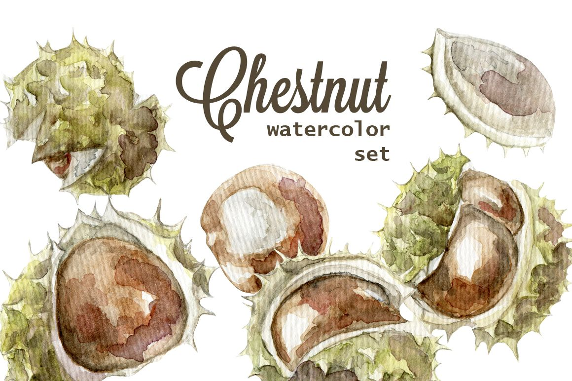 Watercolor chestnut set by NastyaVesna on @creativemarket