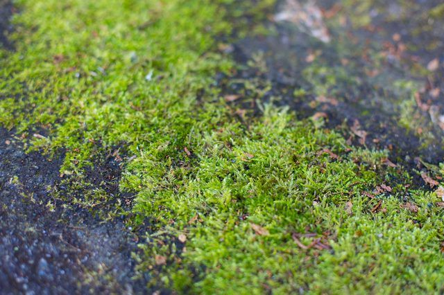 66dbedffe6668e4643971f118c4f330c - How To Get Rid Of Moss In Grass Naturally