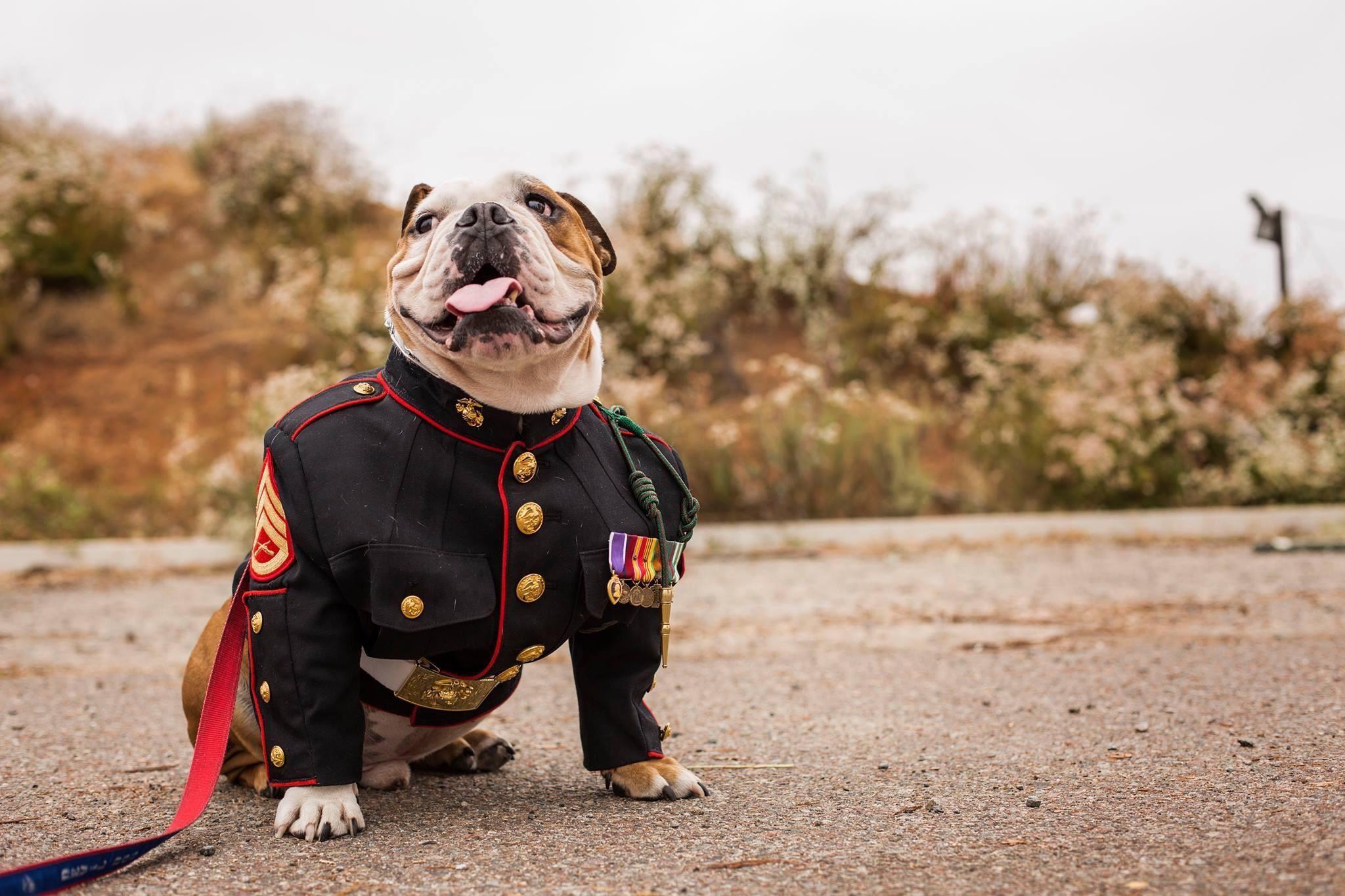 Cute Marine dog http//ift.tt/2sakjkT Marine dog, Marine
