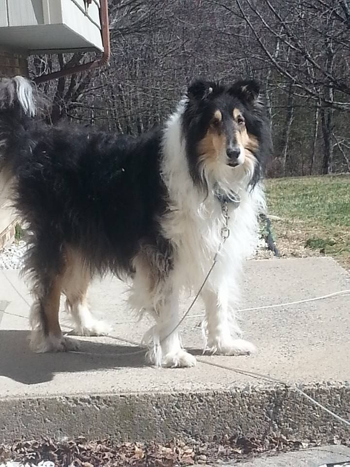Stacy DuncanDOGS CT Lost/Found Dogs 19 hrs near Wolcott