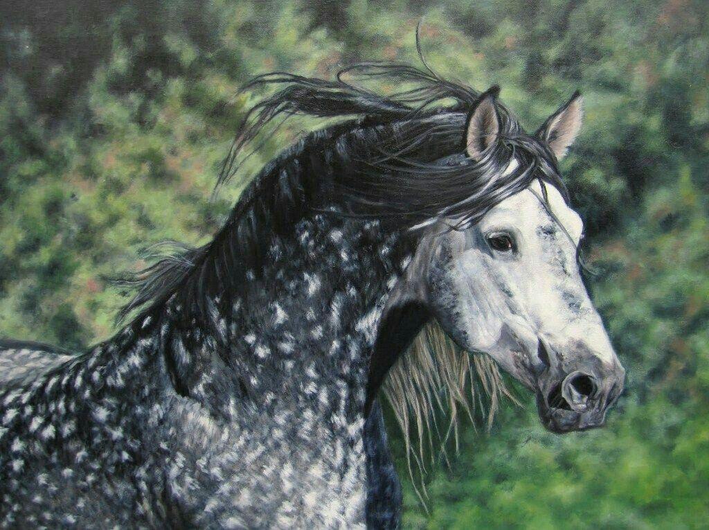 ausmalbilder pferde andalusier  jakari malvorlagen