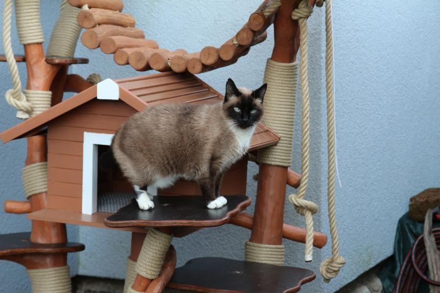 magiccats kletterbaum mit intrigierten outdoor katzen haus und einer katzen h ngebr cke. Black Bedroom Furniture Sets. Home Design Ideas