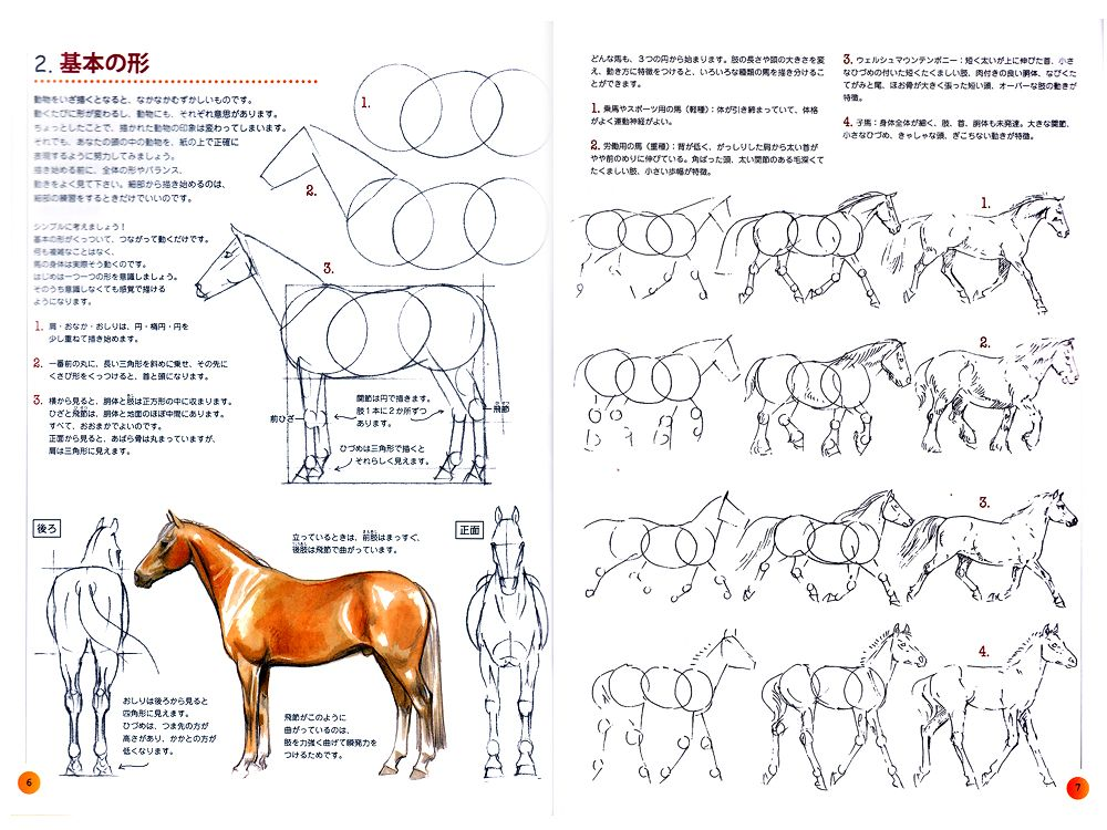 How To Draw Horse Tutorial Reference Book Horse Drawings Dog Coloring Page Drawings