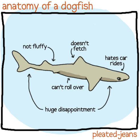 Shark Anatomy Diagram Of Dog - DIY Enthusiasts Wiring Diagrams •