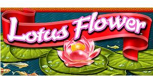 Lotus Flower Igt Videogaming Slots Jjventures Click On Visit