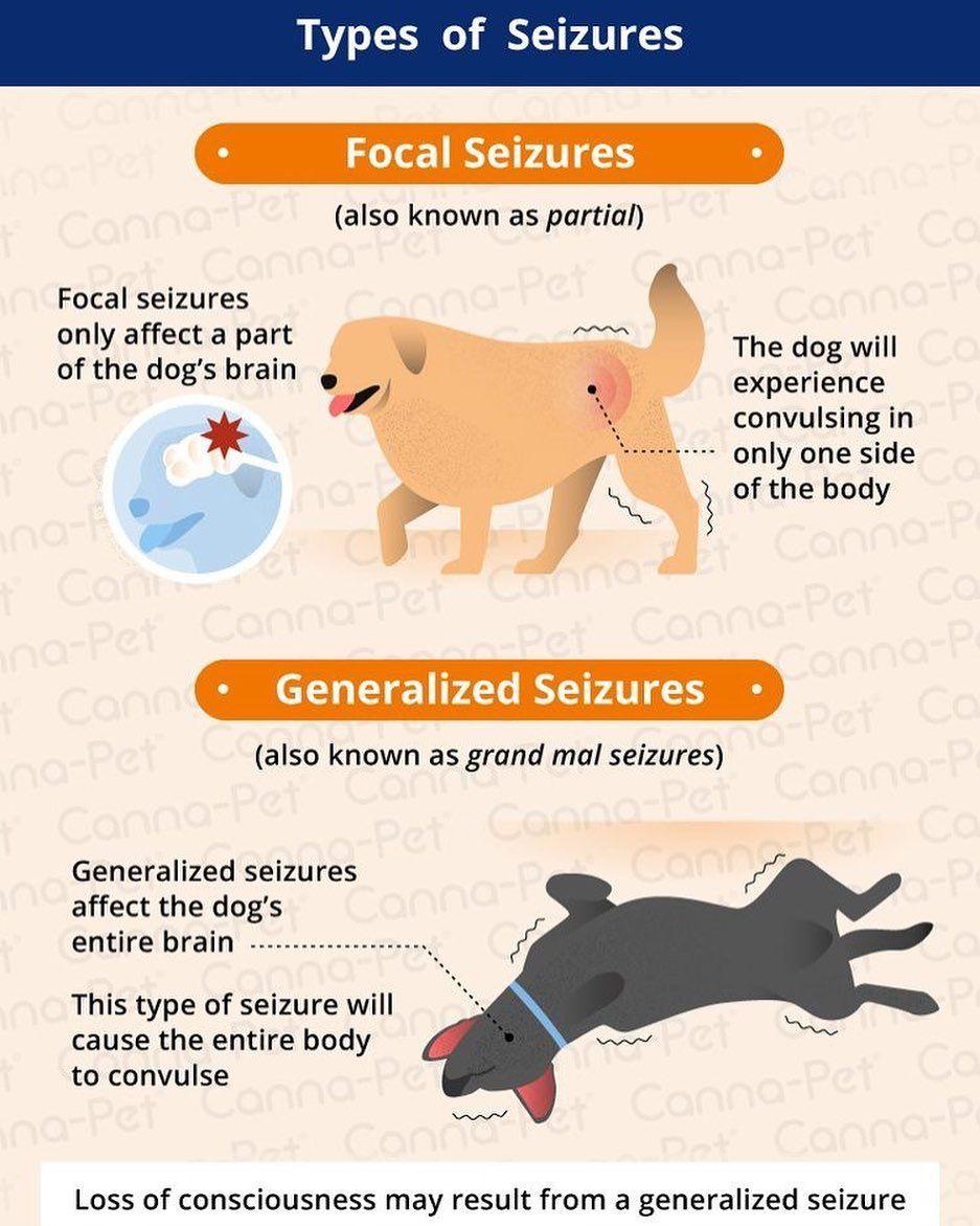 Types Of Seizures Vet Medicine
