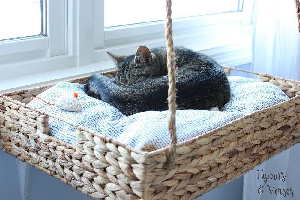 DIY Hanging Basket Cat Perch :: Hometalk