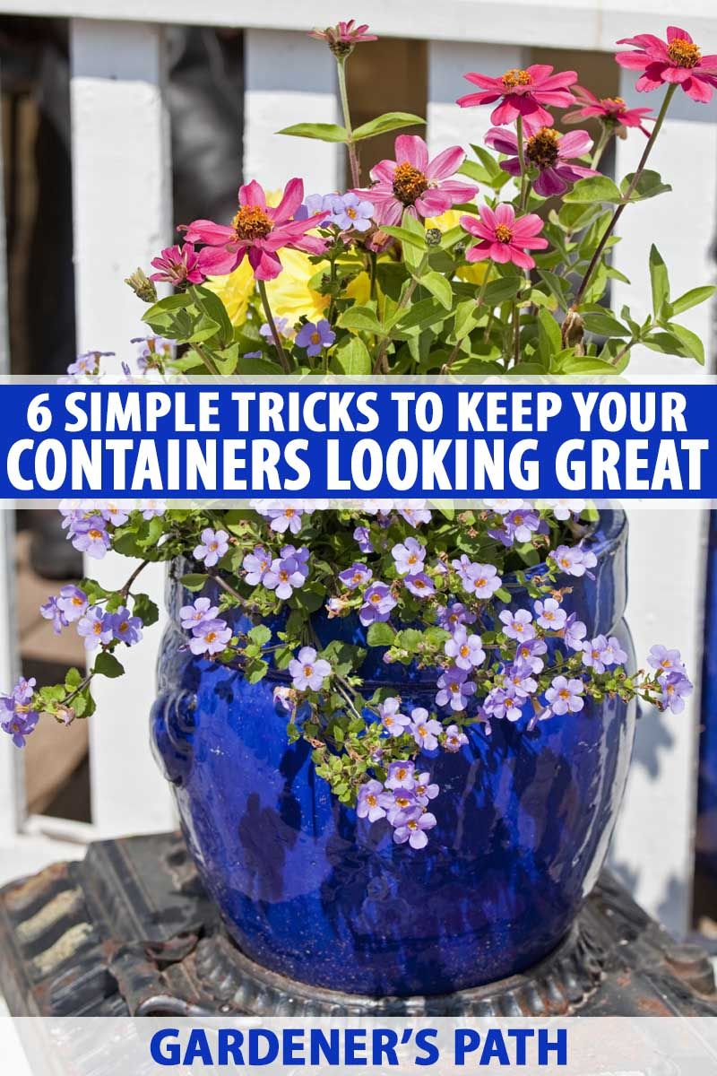6 Simple Tricks For Beautiful Garden Containers 640 x 480