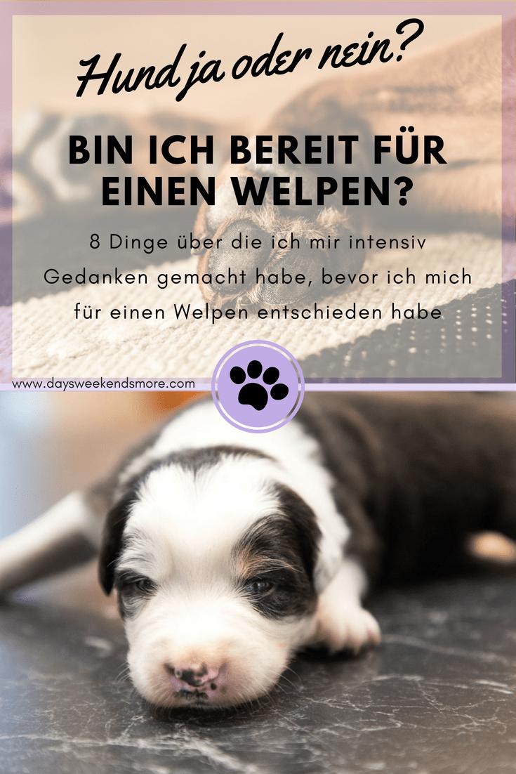 Hund Anschaffen Ja Oder Nein