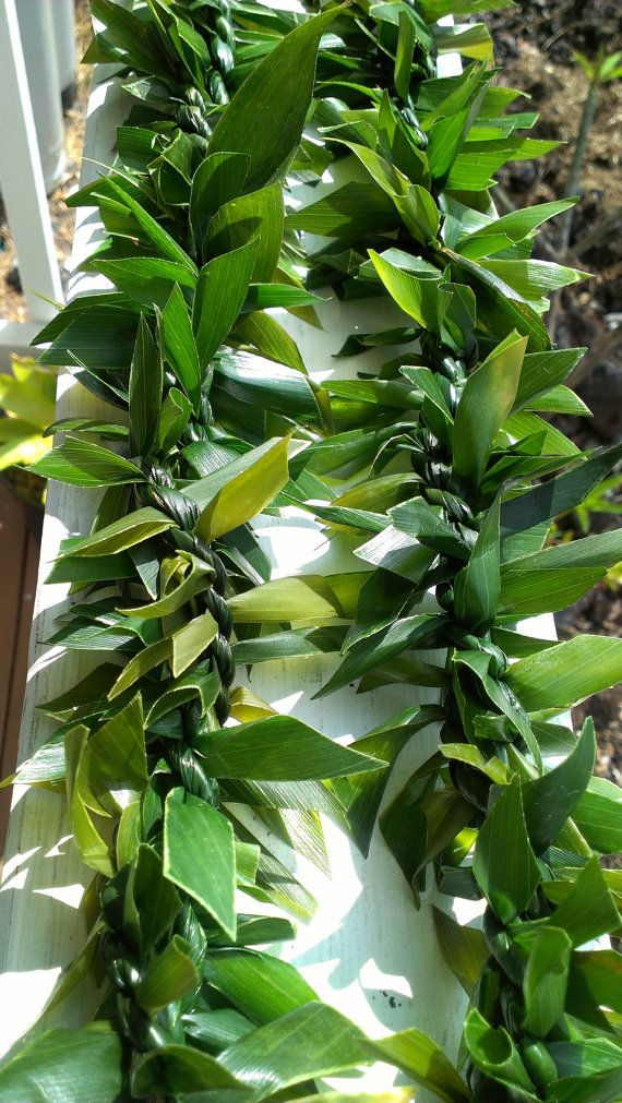 Tea Leaf Lei : Maile, Double, Strand/graduation, Lei/weddings/memorial/lucky, Etsy,, .95, Fresh, Leis,, Graduation, Hawaiian