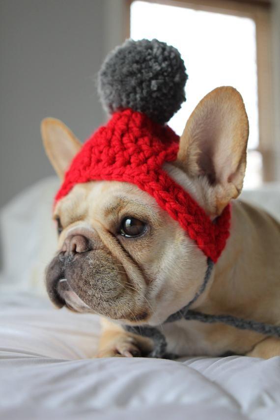 Dog Beanie With Pom Pom Dog Hat Crocheted Dog Hat Dog Gift