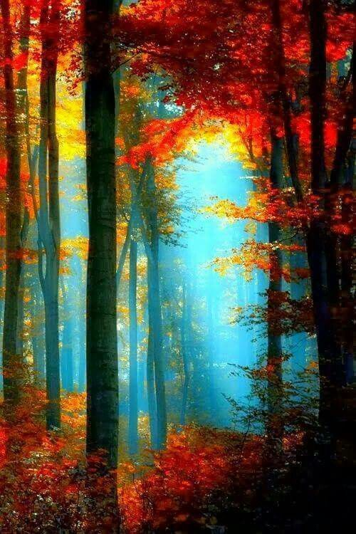 Beautiful sunlight through trees in autumn
