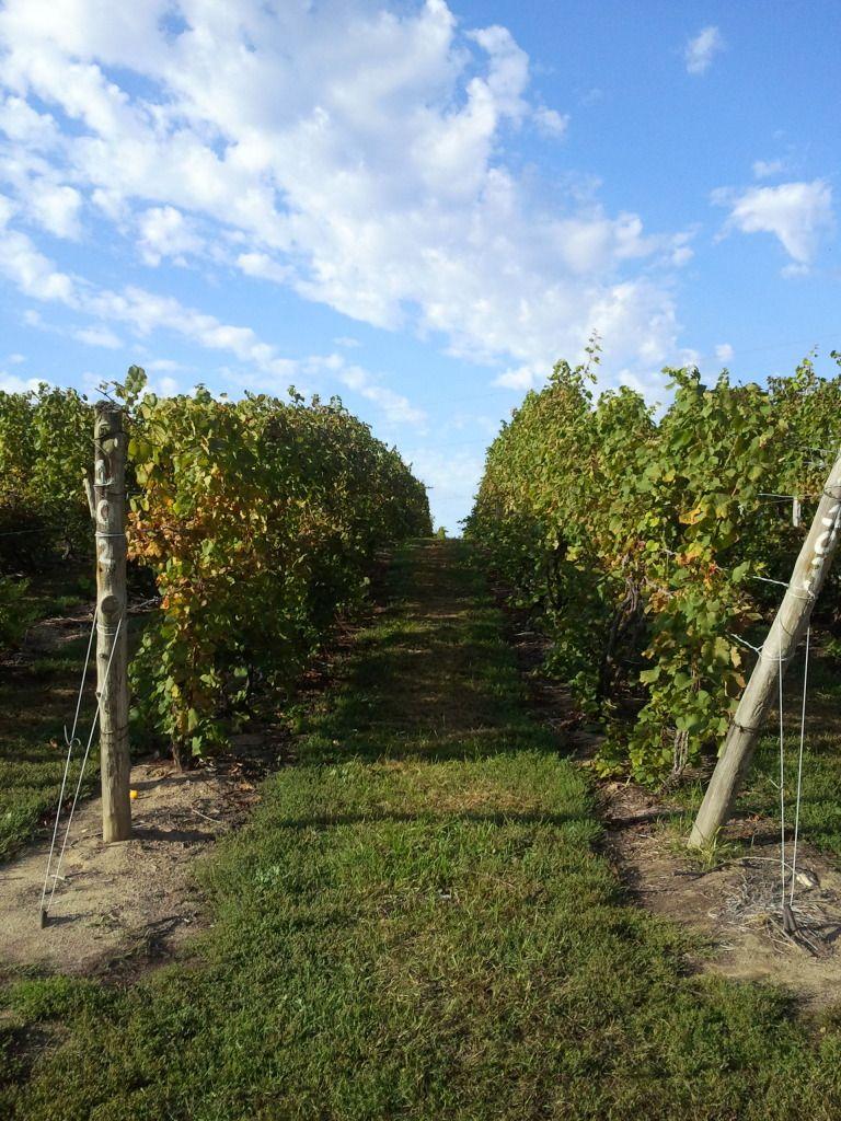 Round Barn Winery in Michigan Winery, China grove