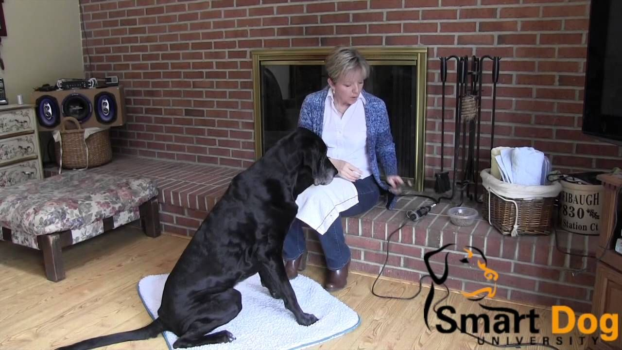Trimming Your Dog's Nails with the Dremel Dog nails