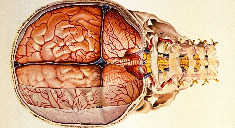 Meninges: anatomía, partes y funciones en el cerebro | psi ...