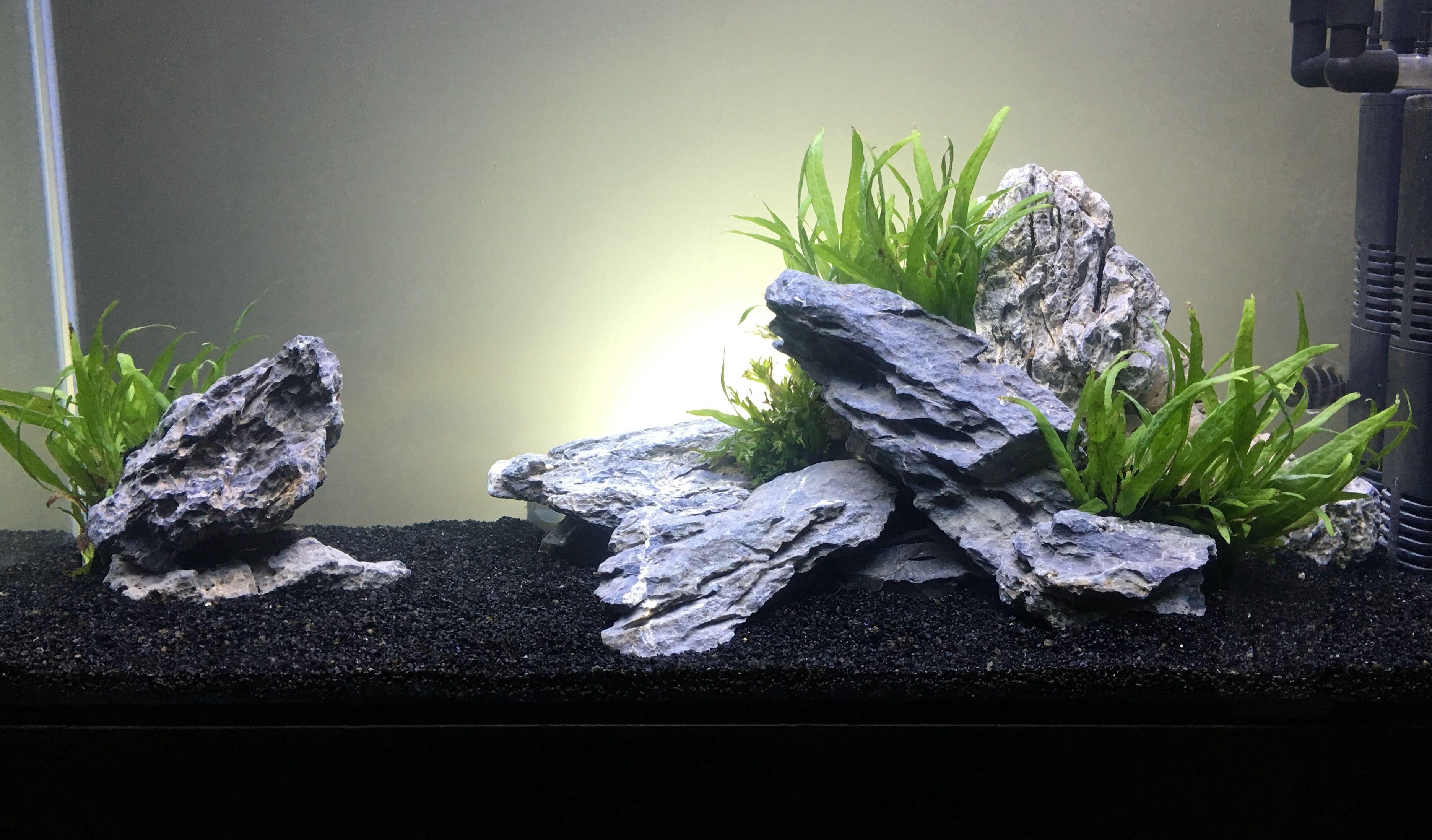 66e189e99bfc04929b520316a902cf12 Frais De Aquarium tortue Aquatique Schème