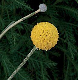 Pin On Garden Grow Ideas
