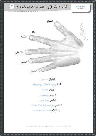 Iqra Wa Ktoub Learning Arabic Arabic Language Names Of Fingers