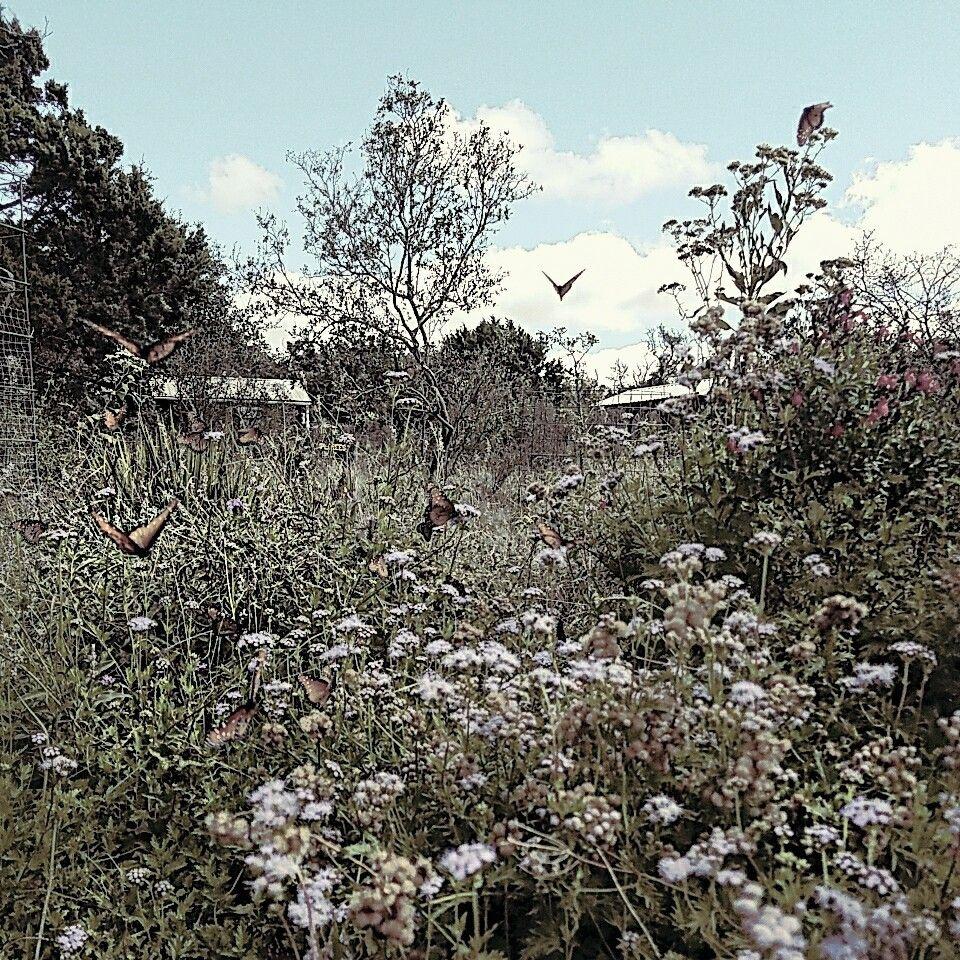 Ordinaire The Butterfly Garden   Austin, TX Nowastedweekend.com