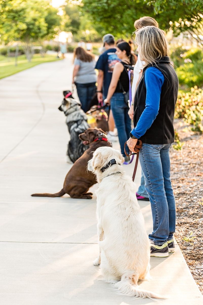 Love All Of The Focused And Calm Dogs On A Training Walk Sit