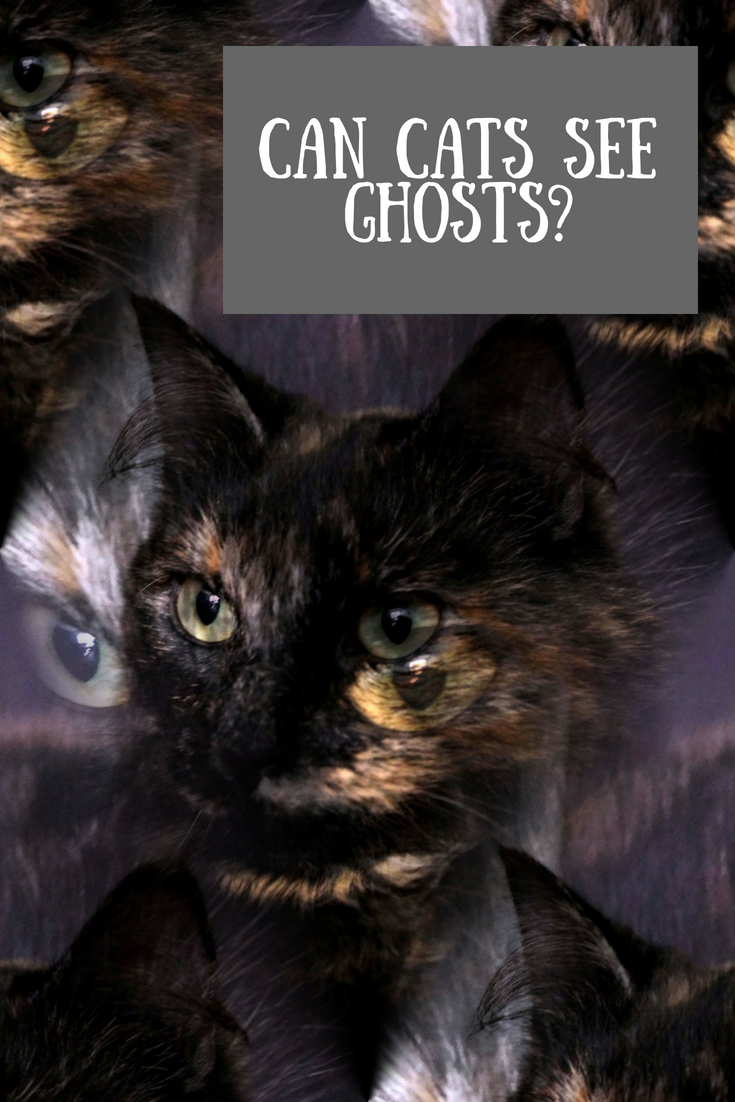 Can cats see ghosts? Can dogs see ghosts too? Can dogs