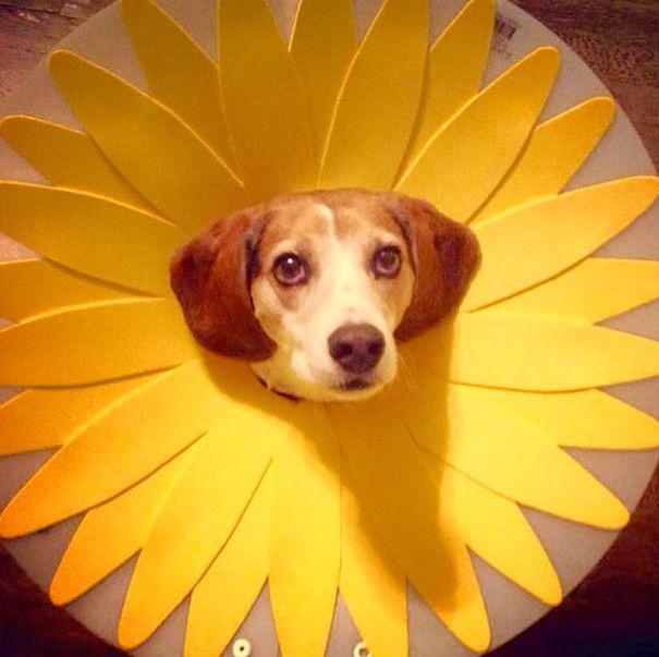 Elizabethan Collar Cone Of Shame Dog Cone Dog Cone Collar