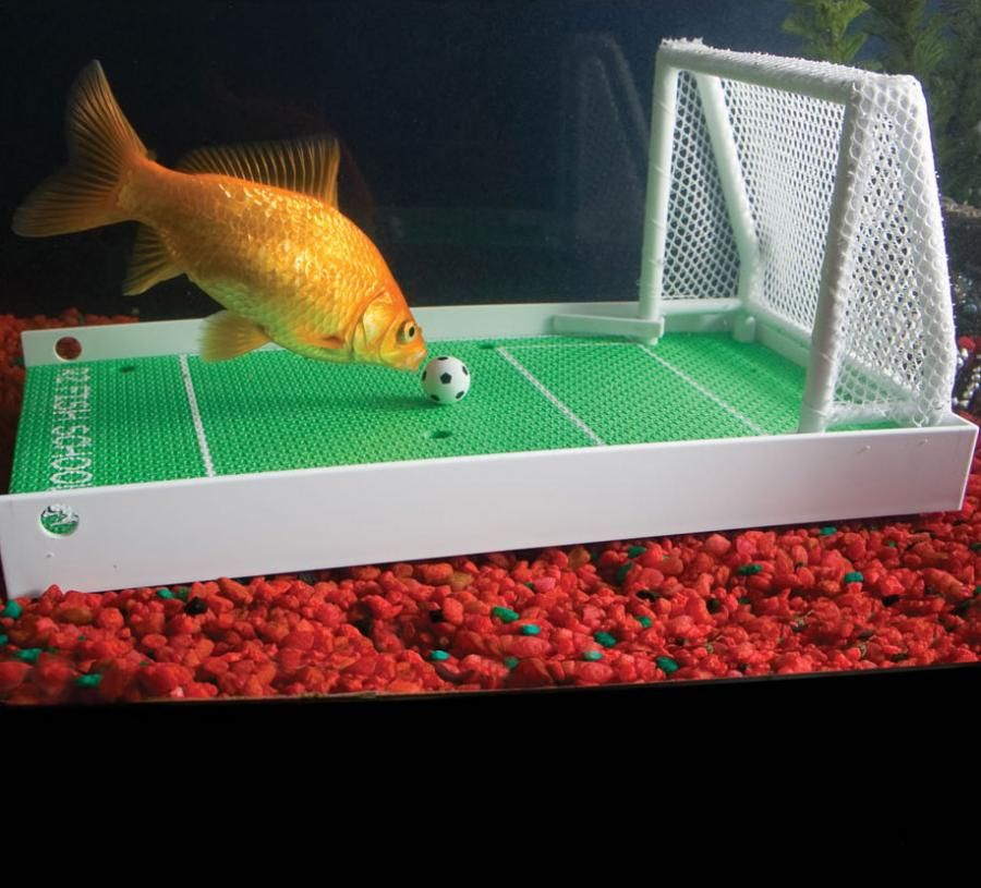 Fish Soccer Field Training Set Pet fish, Training kit