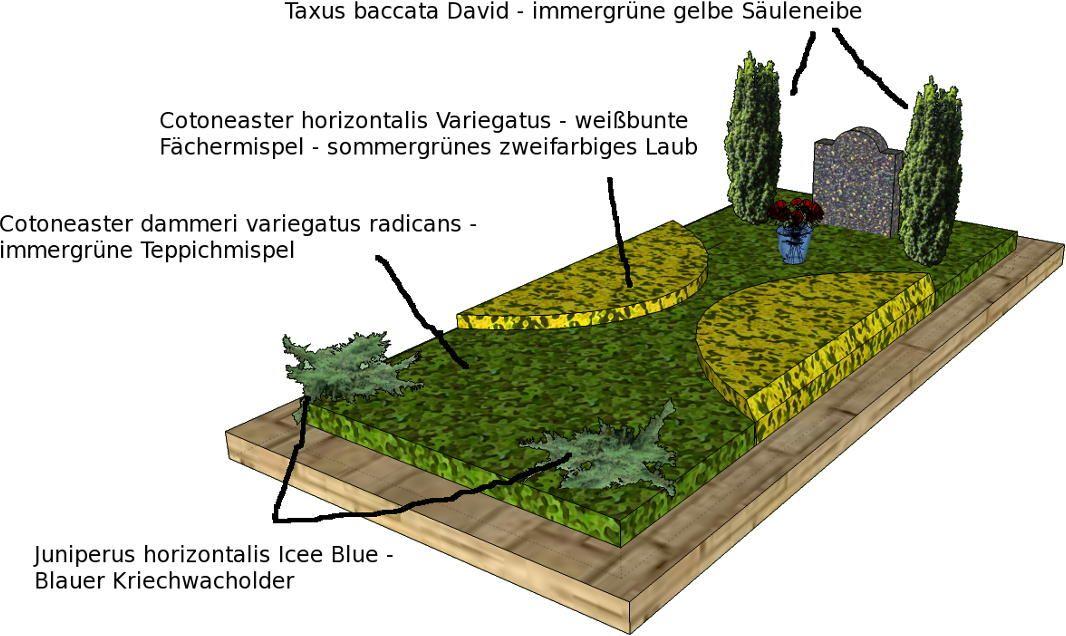 taxus baccata cotoneaster dammeri und horizontalis und kriechwacholder als grabpflanzen. Black Bedroom Furniture Sets. Home Design Ideas