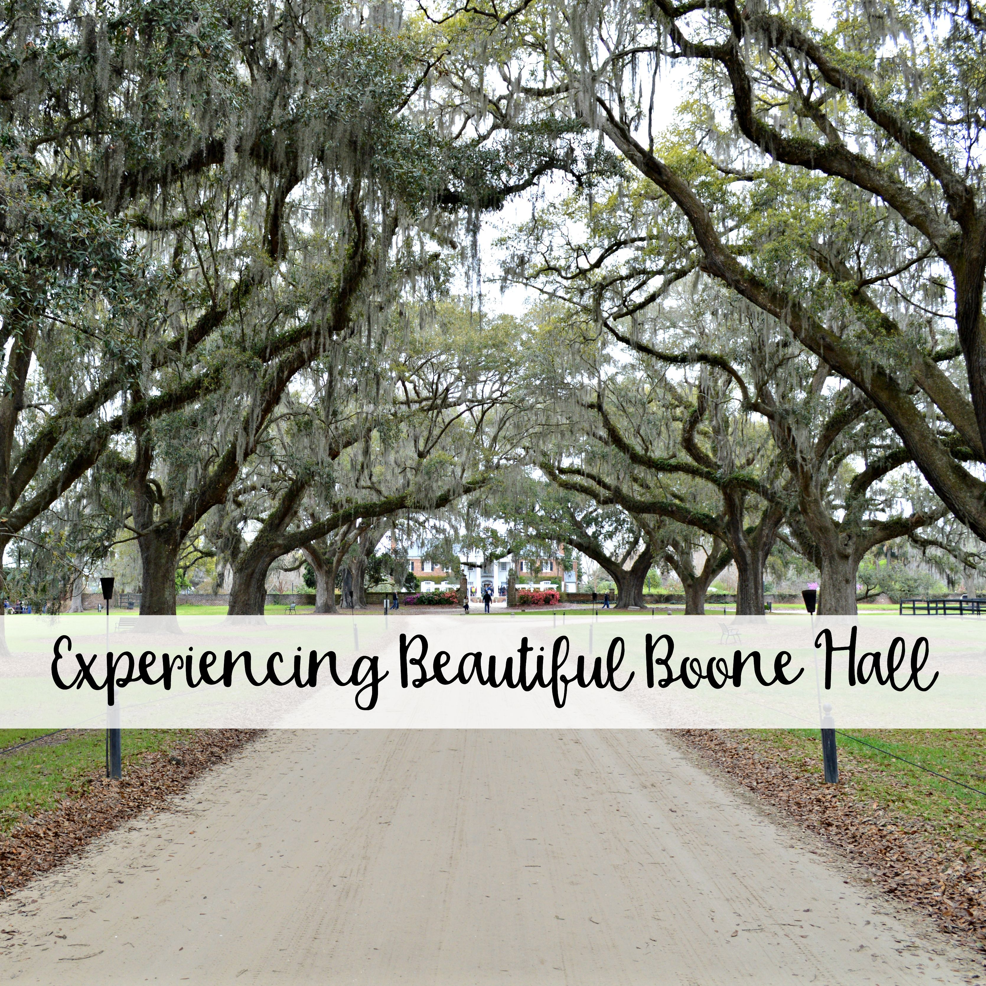 Experiencing Beautiful Boone Hall Boone hall, Boone hall