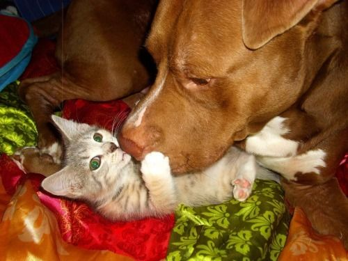 16 Dogs Meeting Kittens For The Very First Time