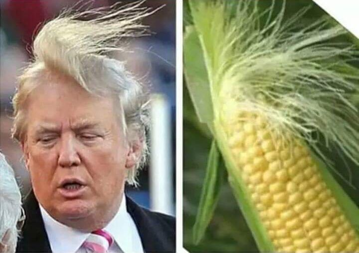 Donald Trump Funny Hair Memes : Funny who wore it better memes u pics caption pictures