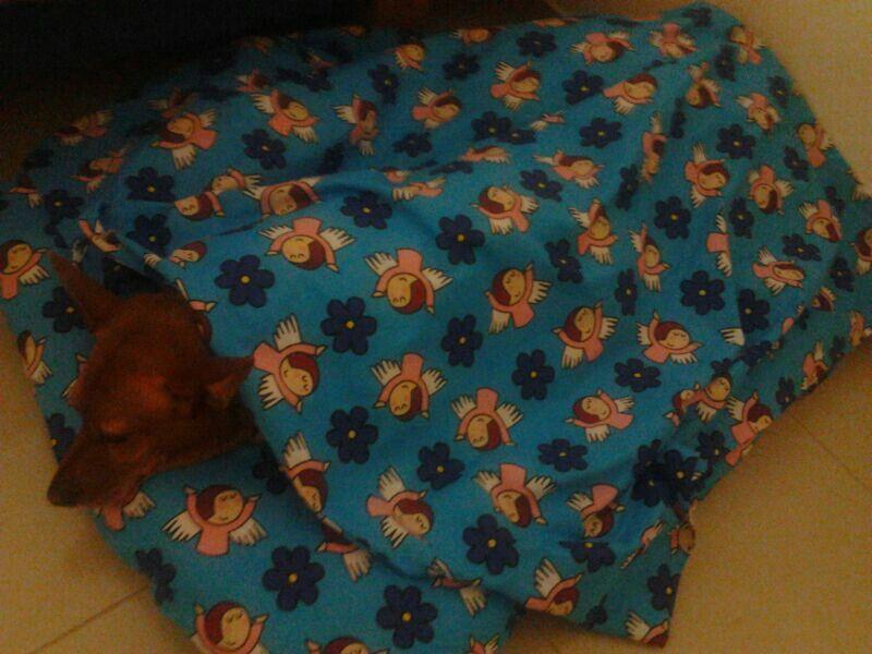 Sleep Like An Angel Dachshund Dog Decor Home Decor