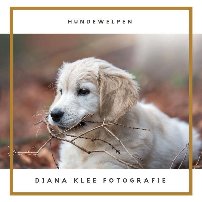 Hundefotografie Im Markischen Kreis Und Nrw Diana Klee Fotografie Hunde Hundefotos Hundewelpen