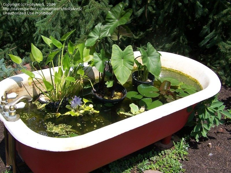 Cast iron tubs for planters on pinterest bathtubs tubs for Outdoor pond tub