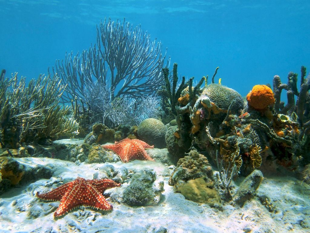 Seabed With Coral And Starfish Jigsaw Puzzle In Under The