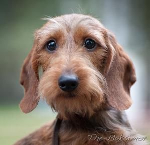 Wire doxies!!! by cora