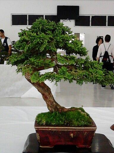 Bonsai Bonsai Pinterest Bonsai And Terraria